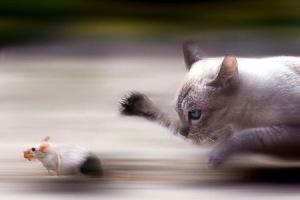 Gato-e-Rato